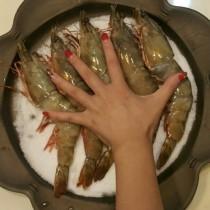 巨大野生海草蝦(肥豬蝦) | 楊家海鮮王國