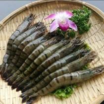 優質大草蝦 | 楊家海鮮王國